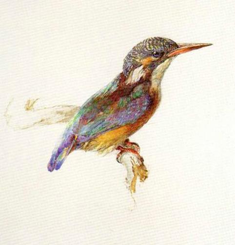 2 Kingfisher_Ruskin